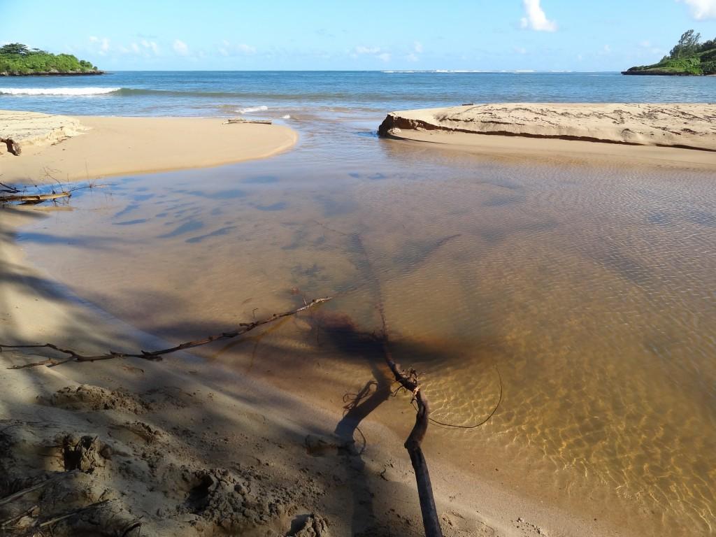 TAIL_Mauritius_2c